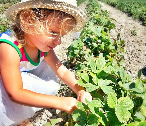 Our daughter, Aquiline Love, strawberry picking at an organic farm in Vancouver BC